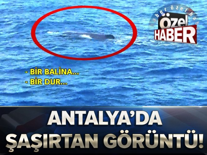 Antalya'da dev balık