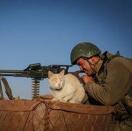 Mağarada bulunan kediler Mehmetçiğin can dostu oldu
