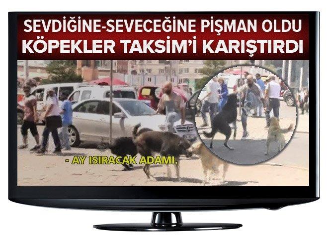 Köpekleri Taksim'i karıştırdı