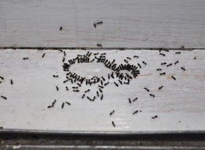 Evdeki böceklerden kurtulmanın doğal yolları