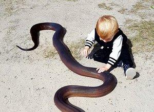 Bu aile yılanları elleriyle avlıyor