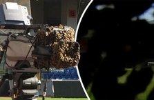 Başakşehir stadını arılar bastı!