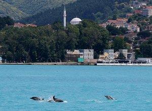 İstanbul Boğazı'nda yunus sürprizi