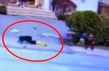 Dehşet! Pitbull sokakta oynayan çocuklara saldırdı