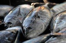 Balıkçıları sevindiren haber