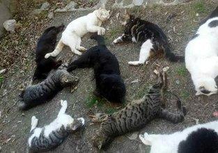 30 kediyi katlettiler
