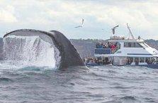 30 tonluk balina böyle poz verdi
