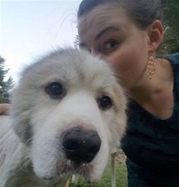 Bu köpek 6 yıl ahırda tutulmuş