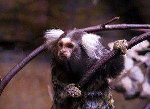 Dünyanın gizemli hayvanları İstanbul'da
