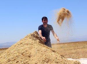 Astronotların besin kaynağı 'kinoa'nın ilk hasadı yapıldı