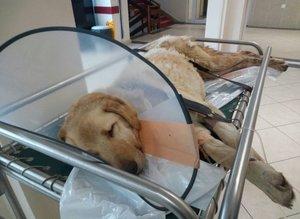 Kanserli köpek için seferber oldular