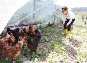 Çocuğunun yumurta alerjisi, anneye tavuk çiftliği kurdurdu